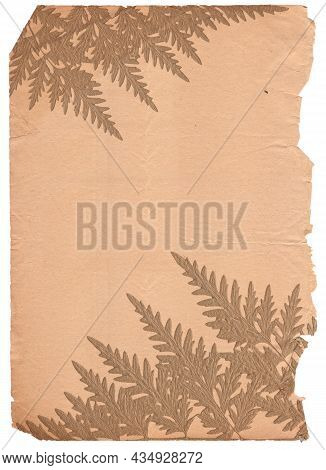 Old Vintage Rough Paper With Plant Relief Texture Isolated