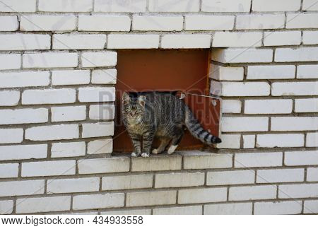 Gray Striped Cat In The Basement Window On A White Brick Wall