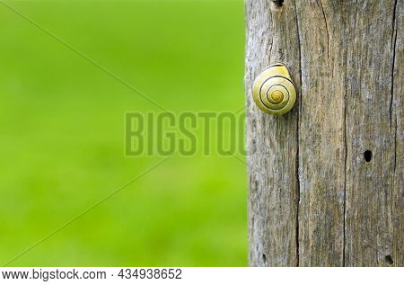A Grove Snail On A Wooden Fence Post In The Countryside With A Green Copy Space Background