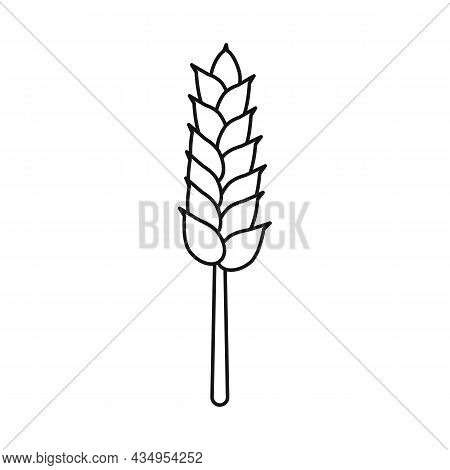 Vector Illustration Of Wheat And Stalk Logo. Set Of Wheat And Gold Stock Symbol For Web.