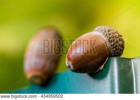 Background With Autumn Acorns In The Autumn Forest. Spring In The Forest. Bright And Sunny Natural B