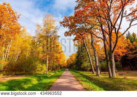 Babolovsky Park In Autumn, Pushkin (tsarskoe Selo), Saint Petersburg, Russia