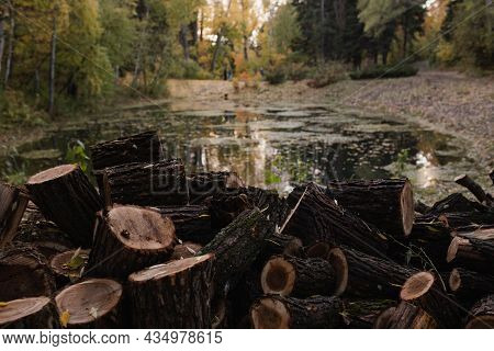 The Sawn Trunk Of A Large Tree Heaped Up Next To A Forest Pond. Sawed Tree In A Heap Next To A Lake