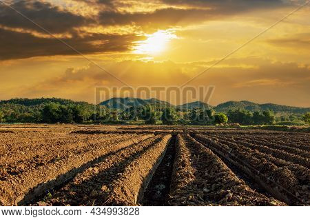 Prepare The Planting.the Conversion Of Vegetable Crops Of Farmers With Sunrays