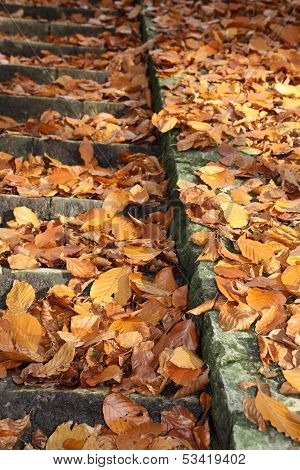 Leaves on stone stairs