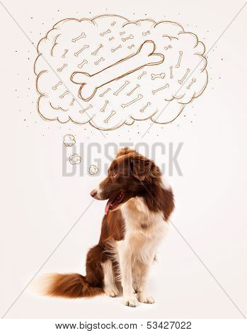 Cute brown and white border collie sitting and dreaming about a bone in a thought bubble poster