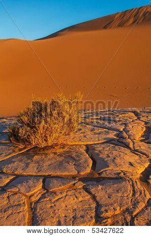 Mesquite Sand Dunes Death Valley National Park