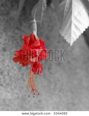Hangingflowerbwedit
