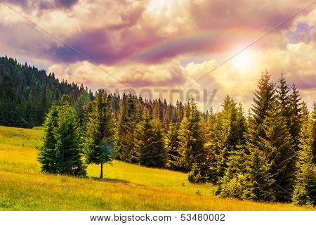 Coniferous Forest On A Steep Mountain