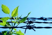 leaf and old barbed wire poster