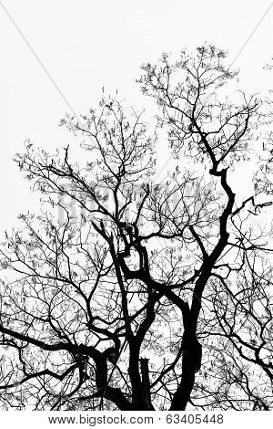 Detailed Tree Branches (black And White)