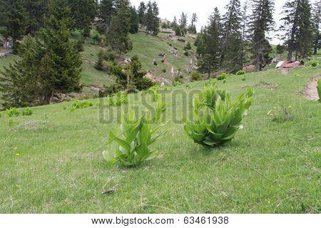 Green plants in skew terrain