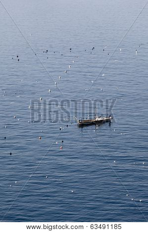 fishing boat and seagulls