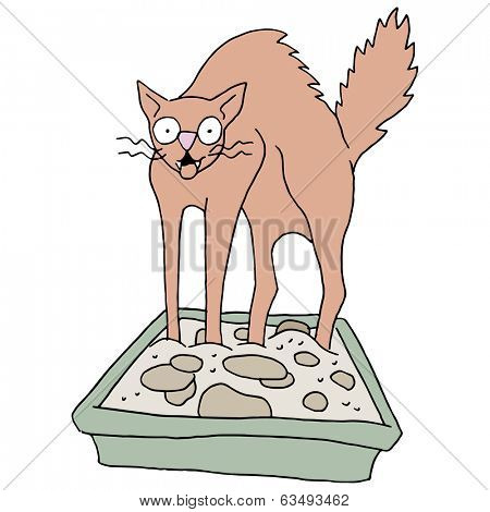 An image of a cat in a dirty litter box.