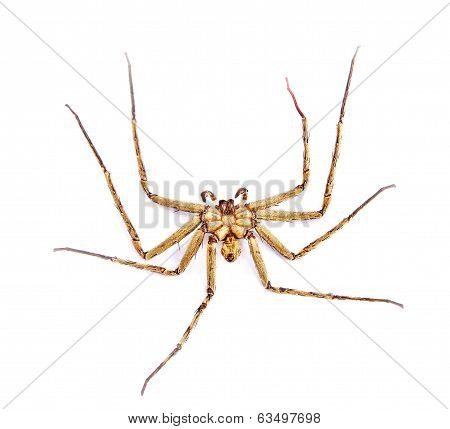 Close up dead spider on a white background poster