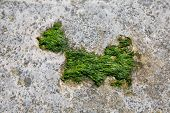 A moss dog shape on a bech rock poster