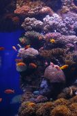 Beautiful Marine Life underwater - fish at the Reef poster