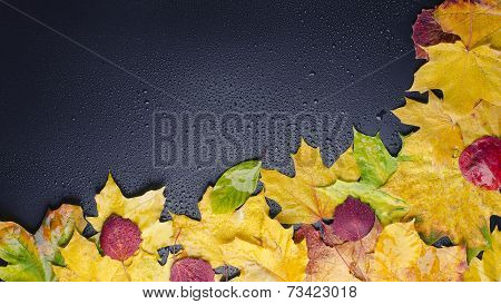 Leaf On Wet Black Background Right