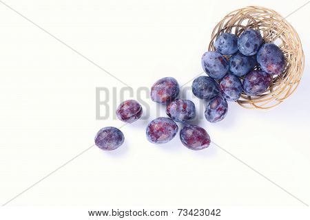 Scattered Plum