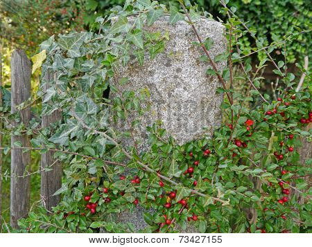 plants on a garden fence