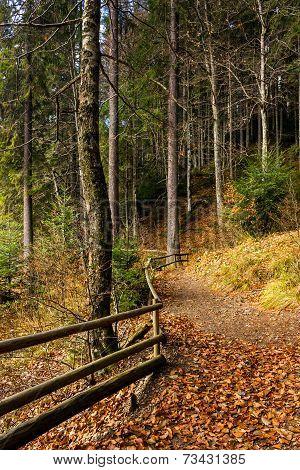 Forest Walks In Autumn