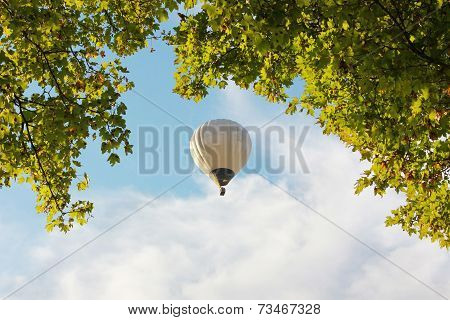 Tree Crown And Floating Hotair Balloon