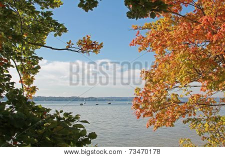 Autumnal Branches, Lake Starnberg And Sail Boats