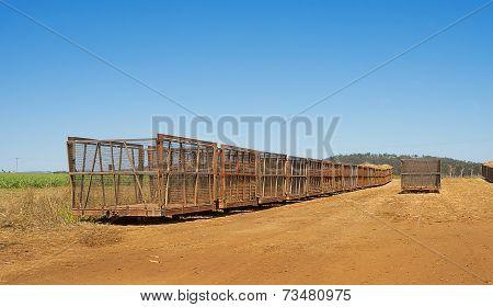 Australian Rural Scene Sugar Plantation