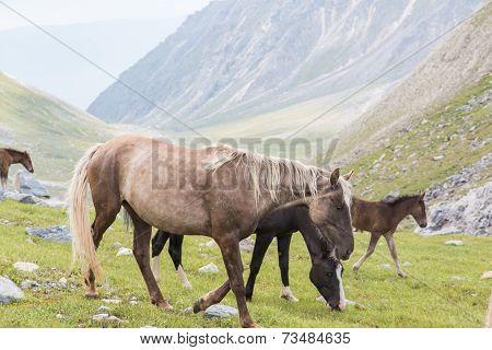 Horses And Colt