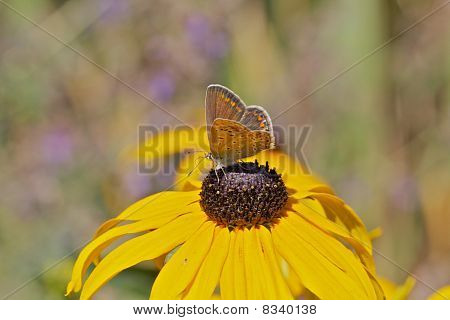Butterfly sitting on colorful flower