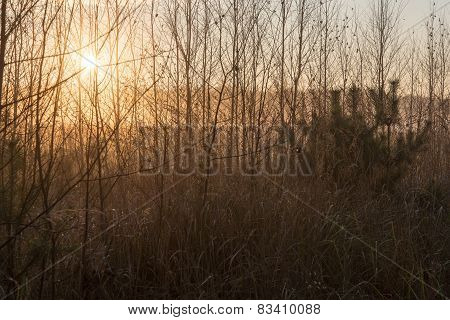 Misty Tree Branches In Bright Sunlight