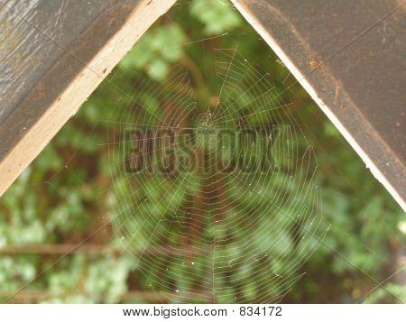 Cobweb in wooden porch