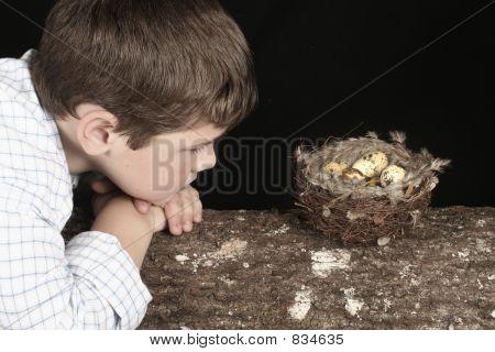 Looking at bird nest