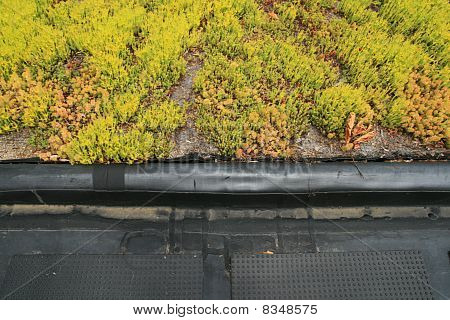 Partial Green Roof Detail