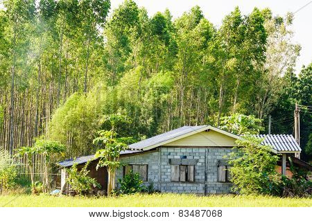 Rural House In Front Of  The Woods