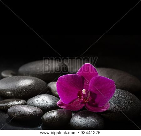 Purple orchid  lying on wet black  stones. Spa concept.  LaStone Therapy