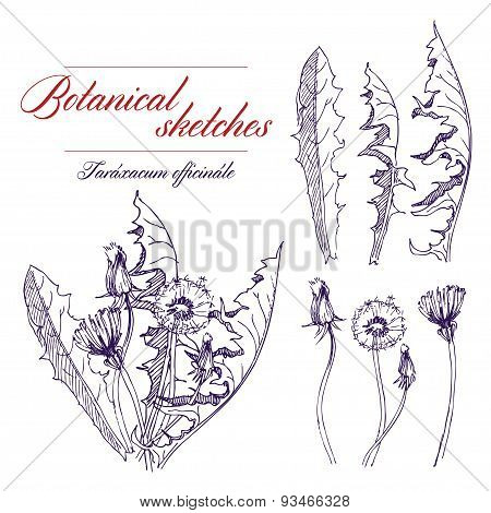 Vector a monochrome botanical sketch of wildflowers poster