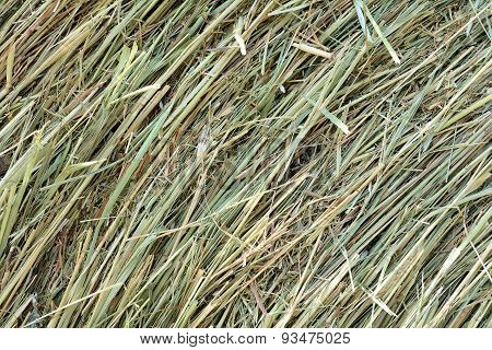 Dry hay