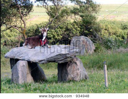 Goatking