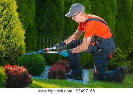 Professional Gardener At Work