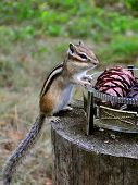 Chipmunk is on the stump and holds a vase poster