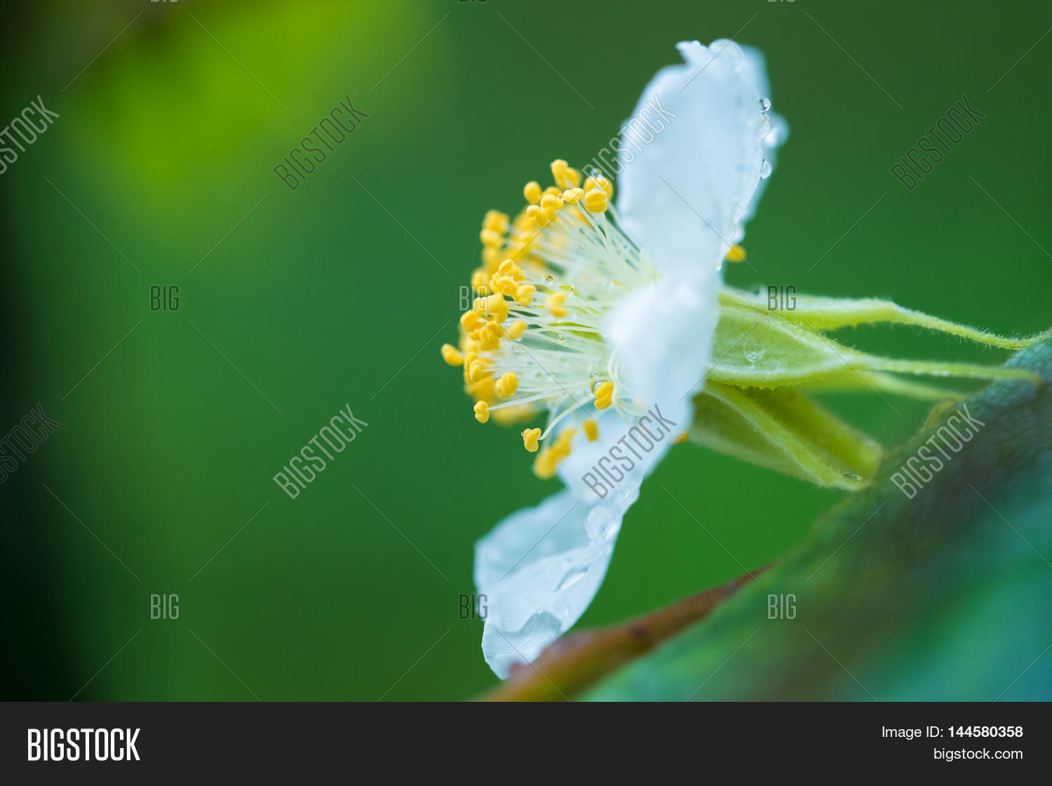 White Flower Wild Image Photo Free Trial Bigstock