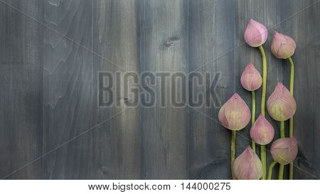 Top View Of Pink Water Lily
