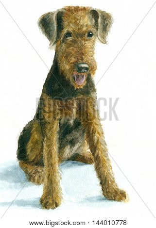 Watercolor Airedale puppy on white background