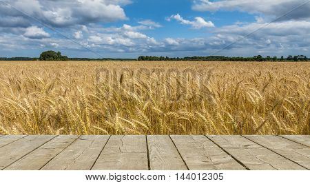 Field with ripening wheat with wooden plank in foreground for text. Photo was taken in one of the ecologically cleanest region of Europe