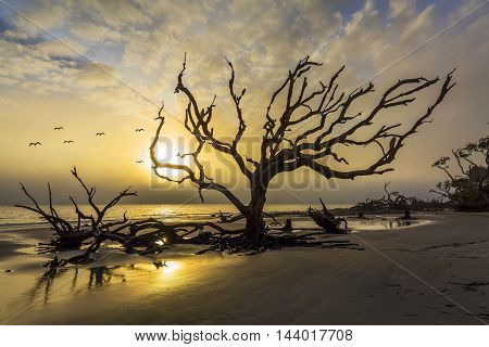 Gulls At Sunrise Over Driftwod Beach