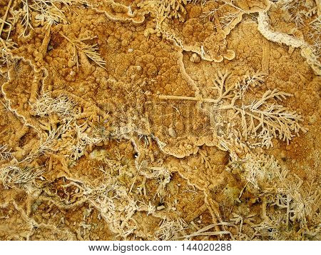 Travertine formation from plant remains in Yellowstone National Park (Wyoming, USA)
