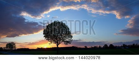 romantic sunset with tree silhouette and cloud formation beside country road
