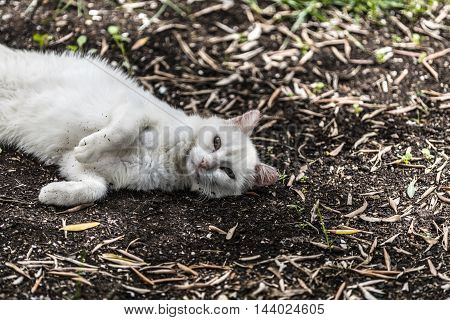 beutiful white cat playing in a garden
