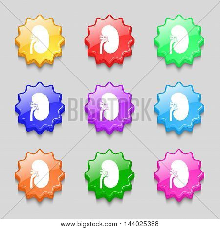 Kidney Icon Sign. Symbol On Nine Wavy Colourful Buttons. Vector
